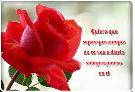 bonitas de rosas rojas con frases de amor imagenes de amor facebook imagenes de rosas rojas con frases de amor para dedicar imagenes