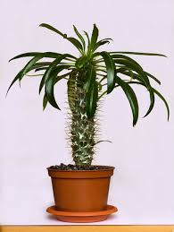 dress up your home with these indoor plants that don u0027t need sunlight