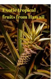 Hawaii exotic travelers images 225 best hawaii images usa travel hawaii jpg