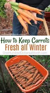 how to keep carrots potatoes and beets fresh all winter carrots