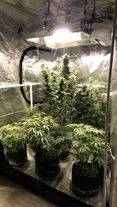 how to set up grow tents for cannabis grow weed easy