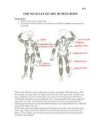 Appendicular Skeleton Worksheet Human Body Archives Page 51 Of 60 Human Anatomy Chart