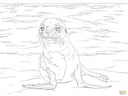 new zealand sea lion print and download coloring pages animal