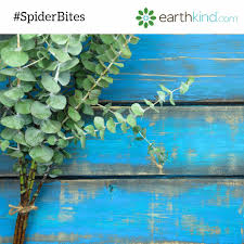 Are Spiders Attracted To Light Get Rid Of Spiders From The House Sneaky Tips That Keep Spiders