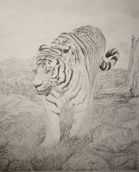 pencil art gallery easy pencil sketches of landscapes tiger