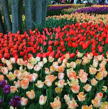 Botanical Garden Cincinnati 20 Places You Need To Explore Cincinnati Ohio Explored