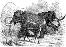 22 mega fauna images prehistoric animals