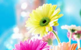 desktop most beautiful flower afari with wallpaper world colourful