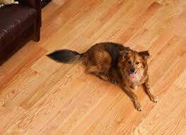 best flooring for dogs cats and bob vila