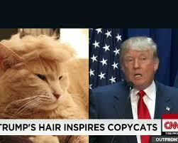 Erin Meme - 150714204025 moos trump your cat meme erin 00000918 custom 54 jpg