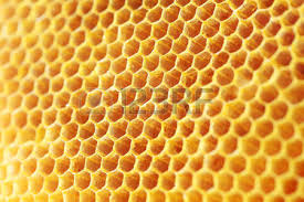 bee hive images u0026 stock pictures royalty free bee hive photos