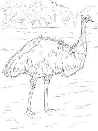 realistic emu australian coloring page countries u0026 culture
