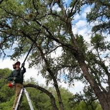 hill country tree works 11 photos tree services lake