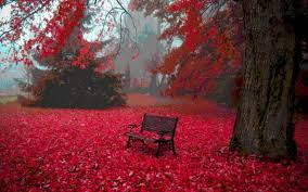 Amazing Pictures Of Nature by Nature Red Color Hd Wallpaper Full Hd Wallpaper