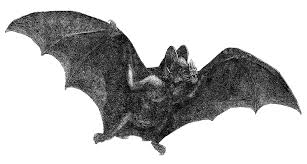 free halloween art antique images free halloween clip art vintage vampire bat in