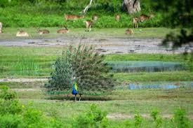 yala u2013 sri lanka u0027s most visited national park u2013 our nomadic life