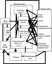 schematic diagram of some of the extrinsic and intrinsic