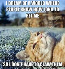 Cat Problems Meme - 10 hilarious heartbreaking first world cat problems that you
