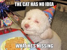 High Dog Meme - funny dog memes google search bad puppy pinterest dog