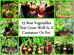 Container Vegetable Gardening Ideas by 15 Best Vegetables That Grow Well In A Container Or Pot Jpg