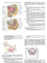 Urinary Tract Anatomy And Physiology Excretory System Anatomy Image Collections Learn Human Anatomy Image