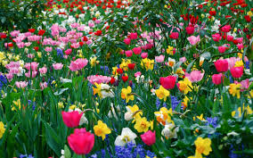 best different types of flowers with pictures pictures hunt