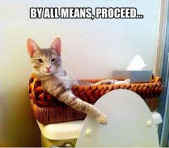 Bathroom Meme - bathroom cat weknowmemes