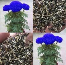 edible blue flowers popular edible blue flowers buy cheap edible blue flowers lots
