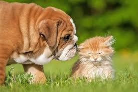 gerüche die katzen nicht mö hund und katze aneinander gewöhnen i tipps auf mein haustier de