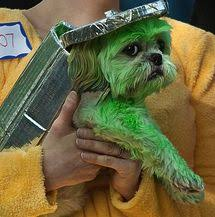 Funny Halloween Costumes Dogs 28 Adorable Dogs Winning Halloween Dog Halloween Halloween