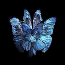 flowers u0027 out of butterfly wings album on imgur