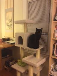 Cat Trees For Big Cats Black Cat Rescue A Mission To Save Black Cats