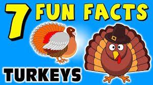7 facts about turkeys turkey facts for thanksgiving