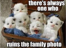 Cuteness Overload Meme - cuteness overload meme by miro123 memedroid