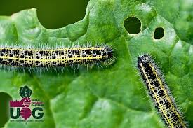 innovative vegetable garden pests and diseases dealing with pests