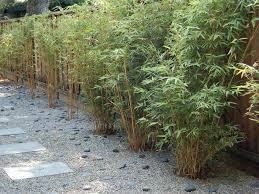 Bamboo Backyard Backyard Bamboo Landscape Asian With California Garden San