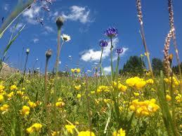 native plant network native seed supply u0026 the restoration species pool u2014 international