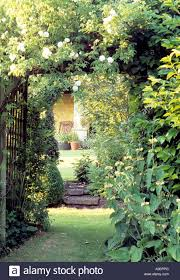 trellis arbor with climbing roses in english country garden stock