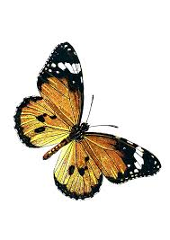 butterfly clip art at clker com vector clip art online royalty