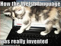 Funny Kitten Memes - how the welsh language was really invented cheezburger funny