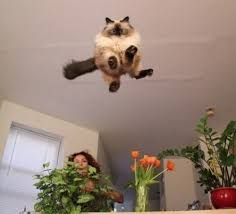 Flying Cat Meme - create meme flying cat pictures meme arsenal com