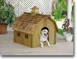 building a miniature barn shaped doghouse