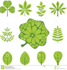 http thumbs dreamstime com z different types leaves 25338353 jpg