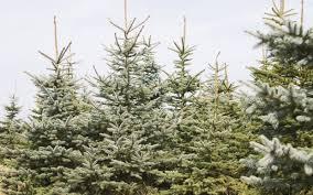 christmas 33 boyd mountain christmas tree farm picture