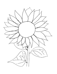 Sunflower Coloring Pages Free Printable Coloringstar Sunflower Coloring Page