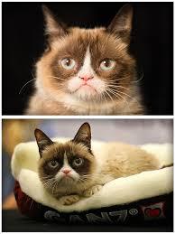 Image 9 Best Grumpy Cat - grumpy cat meme latest fun ny fat and happy cats photo bombs
