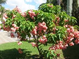 gorgeous trees and flowers picture of sandals south coast white