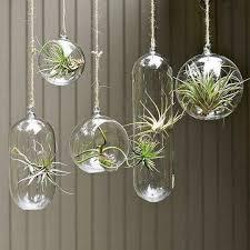 hanging glass terrarium small garden ideas