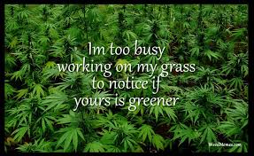 Grass Memes - busy working my grass to notice yours greener weed quote