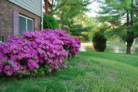 ideas astonishing types of bushes for modern garden and